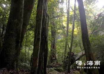 海南岛作为全国最大的热带林区